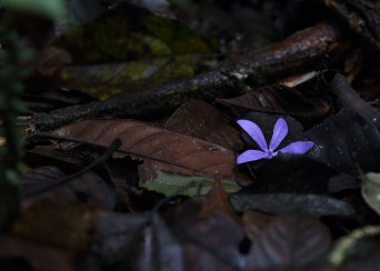 Purple flower, Amazon ©KathyWestStudios