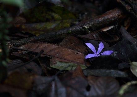 Purple flower, Amazon ©KathyWestStudios