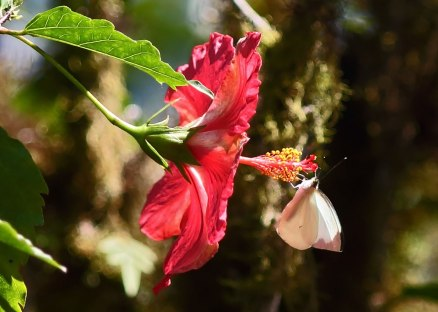 Butterfly and flower, Ecuador ©KathyWestStudios