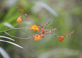 Wild orchids, cloud forest, Ecuador ©KathyWestStudios