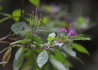 Cloud forest flowers, Ecuador ©KathyWestStudios