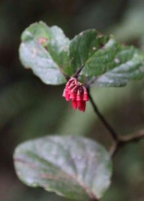 Tiputini Biodiversity Station ©KathyWestStudios