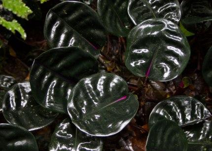 Amazon forest floor, Tiputini Biodiversity Station ©KathyWestStudios