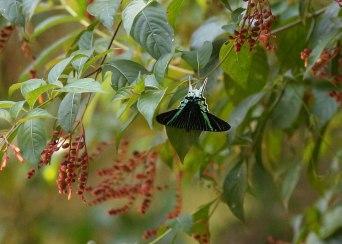 Butterfly, Tiputini Biodiversity Station ©KathyWestStudios