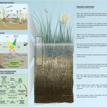Delta ecosystem illustration for US Geological Survey grant. ©KathyWestStudios