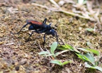 Assassin bug, Ecuador ©KathyWestStudios