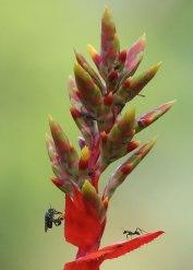 Insect ecosystem, Tiputini Biodiversity Station ©KathyWestStudios