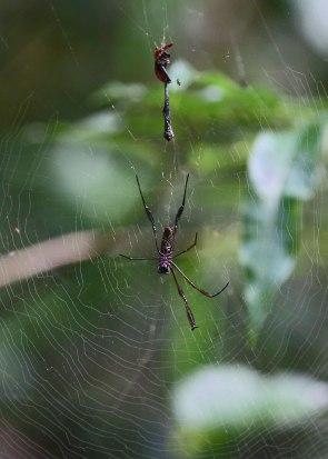 Spider in web, Tiputini Biodiversity Station ©KathyWestStudios