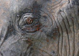 Elephant eye, Tanzania ©KathyWestStudios