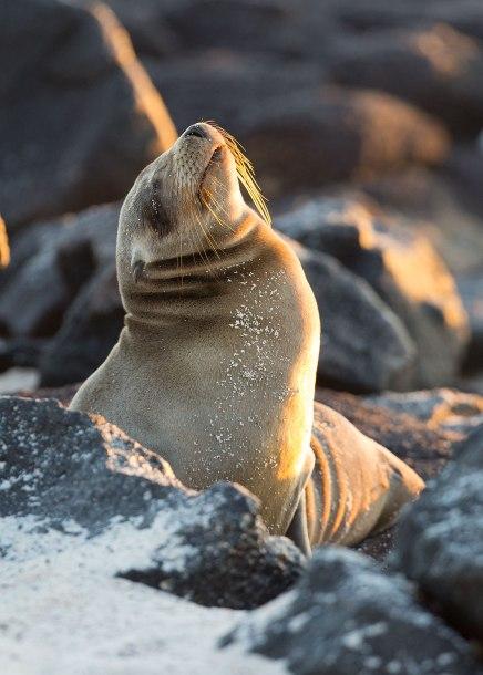 Morning light, sea lion ©KathyWestStudios