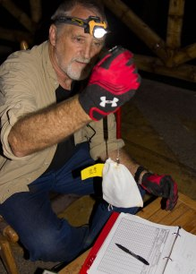 Chiroptologist weighing bat for study ©KathyWestStudios