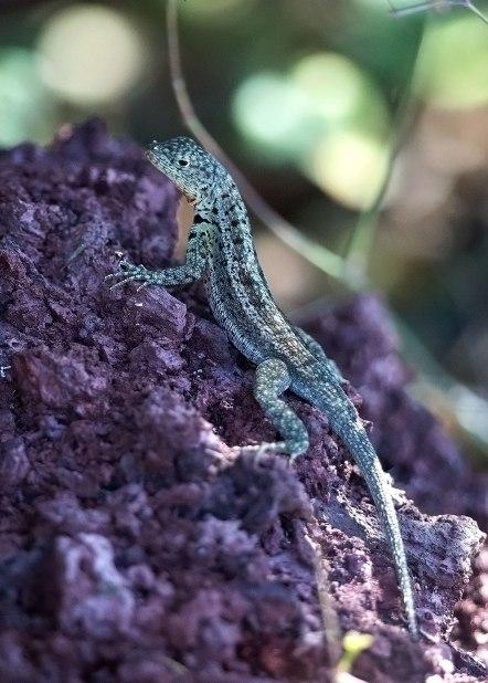 Galapagos Islands ©KathyWestStudios
