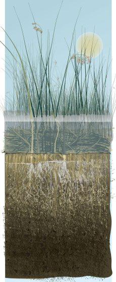 wetlandplants