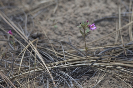 New life out of the wildfire ashes, California