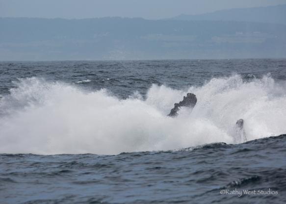 Humpback whale breach splash, Monterey Bay, Kathy West Studios©2017