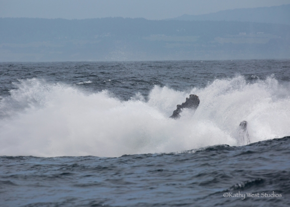 Humpback whale breach splash, Monterey Bay, Kathy West Studios©2017