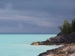White-tailed tropicbirds (Phaethon lectures) flocking off nesting cliffs, Whale Bay, Bermuda