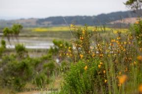 Morro Bay State Park, California. KathyWestStudios_©2019